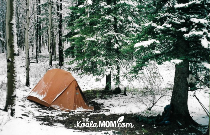 Brown backpacking tent pitched under an evergreen tree, with snow sitting around.