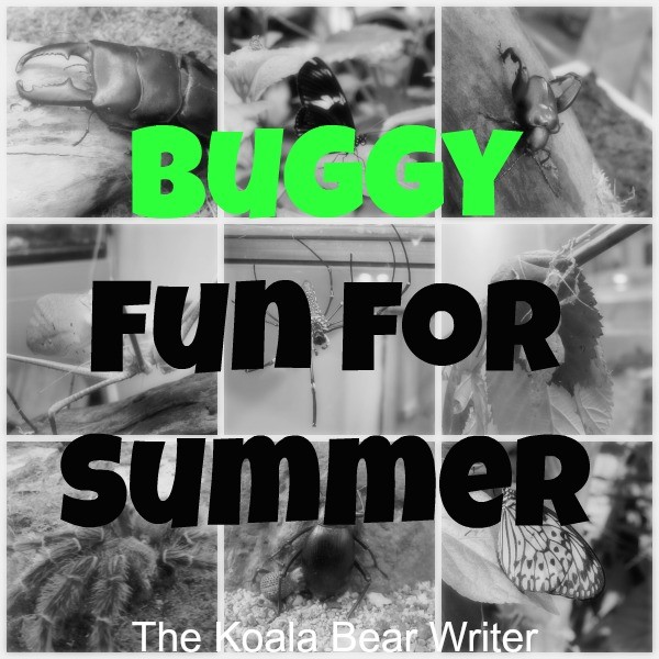 Buggy Fun for Summer