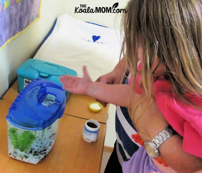3-year-old feeding her pet betta fish with Daddy's help.