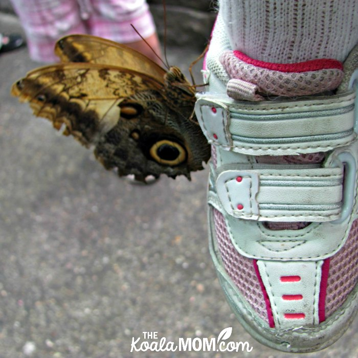 Butterfly on a toddler's shoe at the Pacific Science Center in Seattle, Washington.