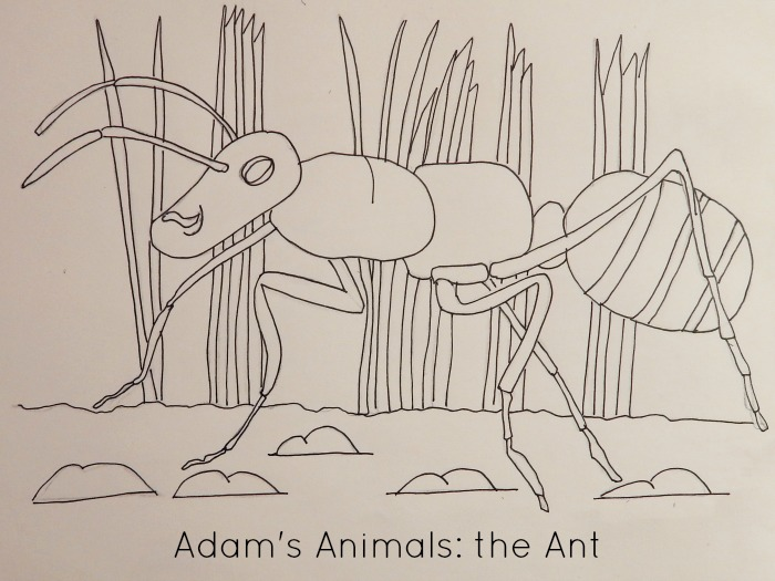The ant, a sample colouring page from Adam's Animals