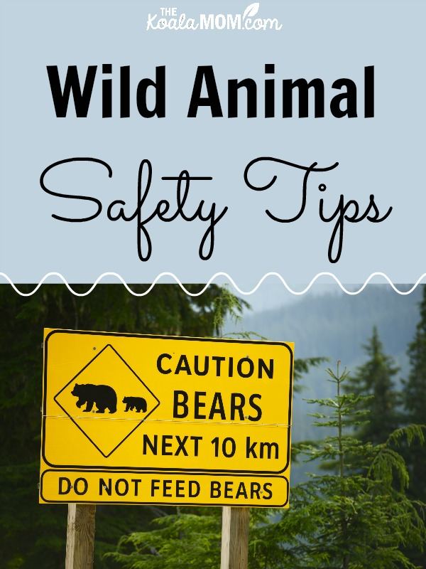 Wild Animal Safety Tips