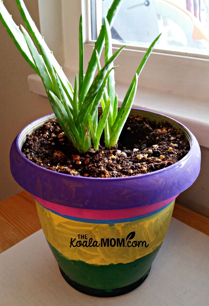 Painted plant pot for an aloe plant