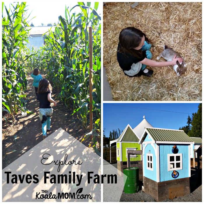 Explore Taves Family Farm in Abbotsford, BC