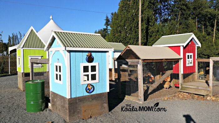 Chicken coops at the Taves Family Farm