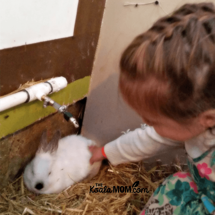 Jade petting the bunnies at the Taves Family Farm