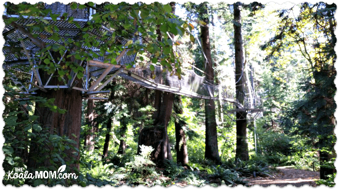 The canopy walk at UBC