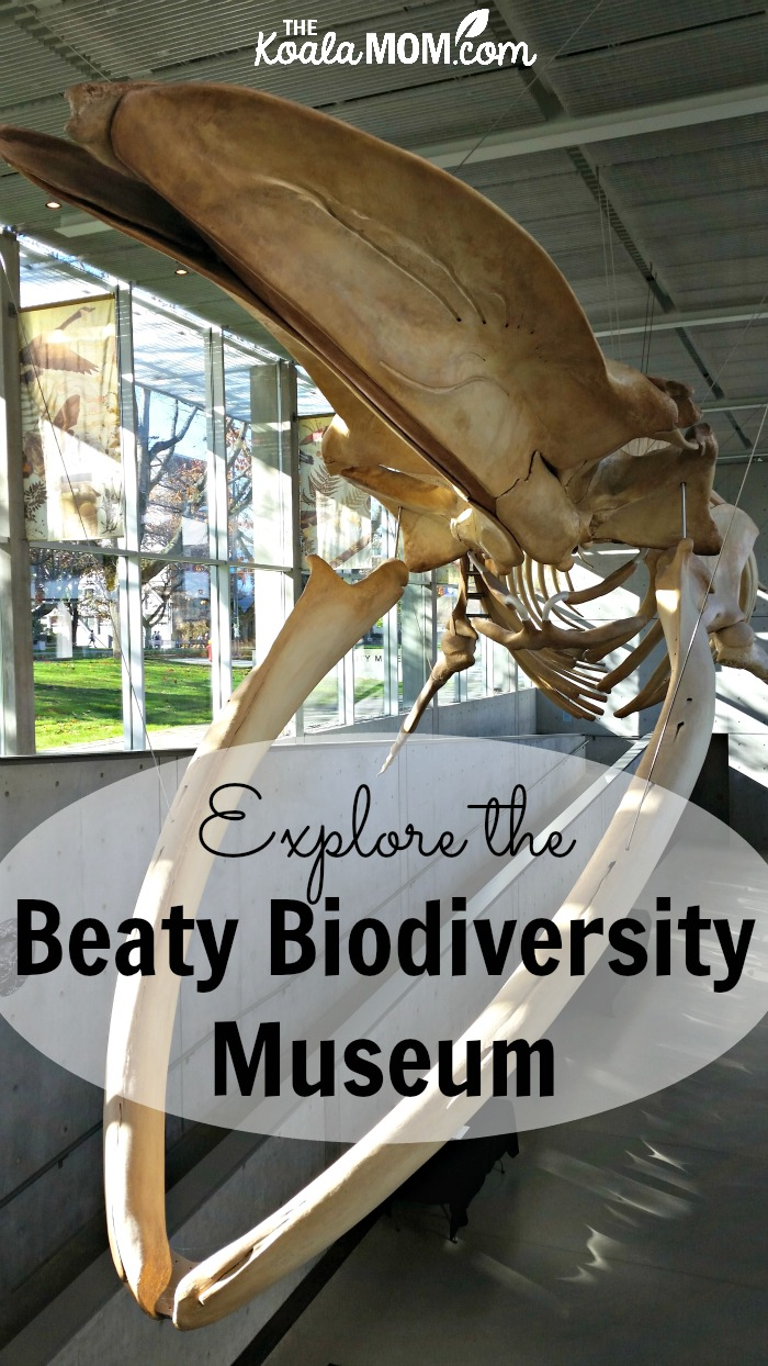 Explore the Beaty Biodiversity Museum