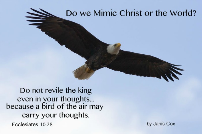 Do We Mimic Christ or the World? photo by Bill Weaver