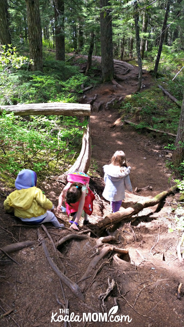 The girls hiking the Lookback Loop trail at the Sea to Sky Gondola