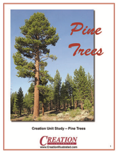 Pine Trees Unit Study by Creation Illustrated