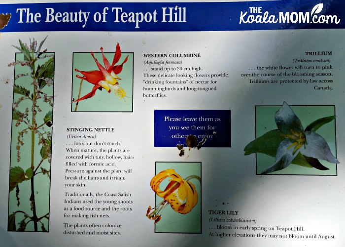 The Beauty of Teapot Hill: a sign about the flowers and plants near Cultus Lake, BC