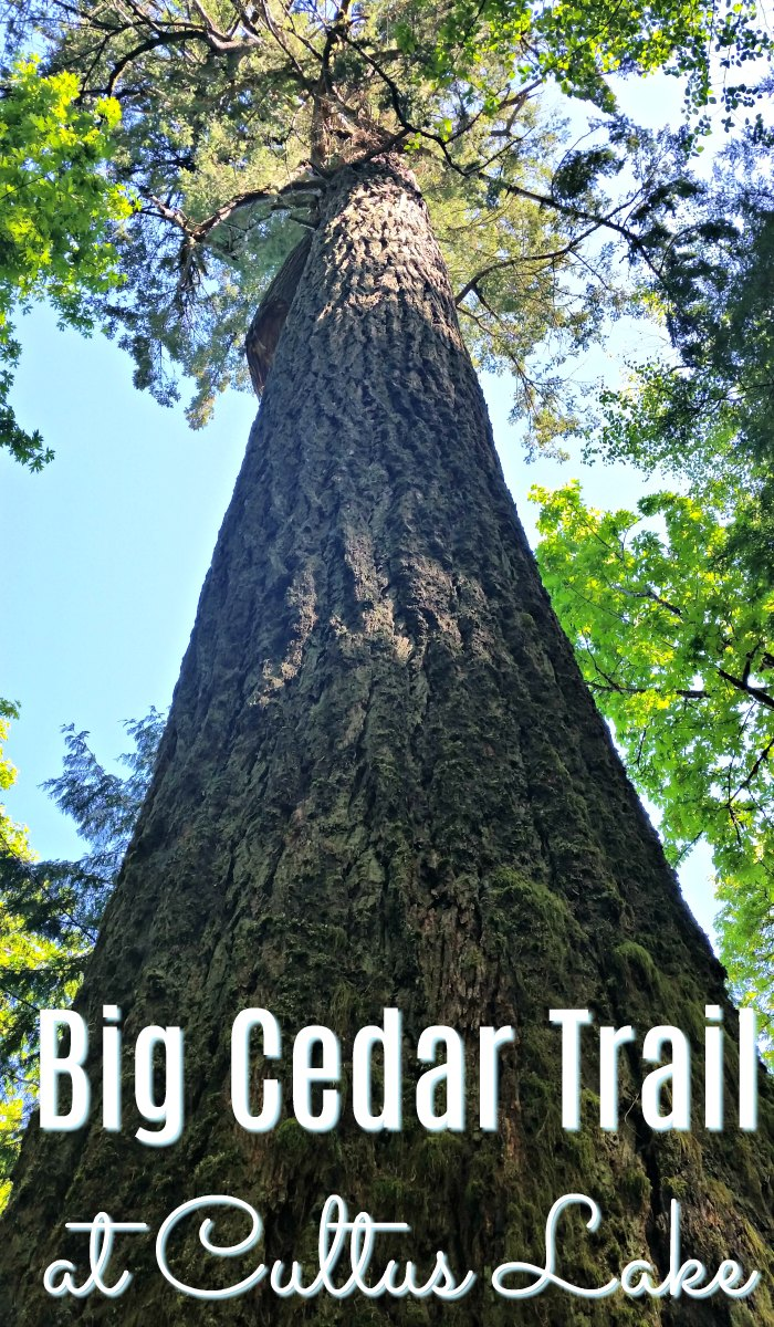The Big Cedar Trail at Cultus Lake
