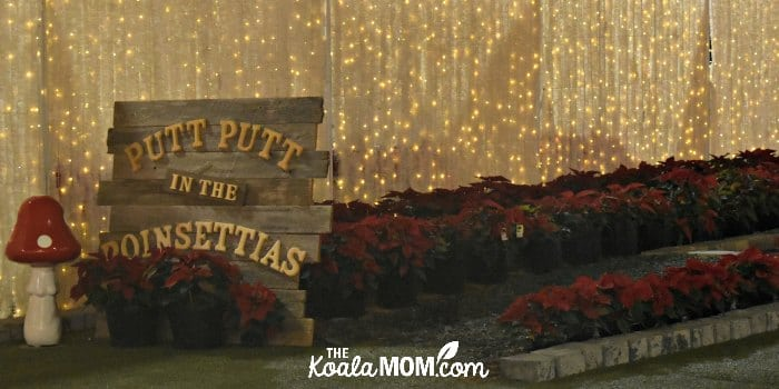 Putt-putt in the poinsettias at Christmas Glow.