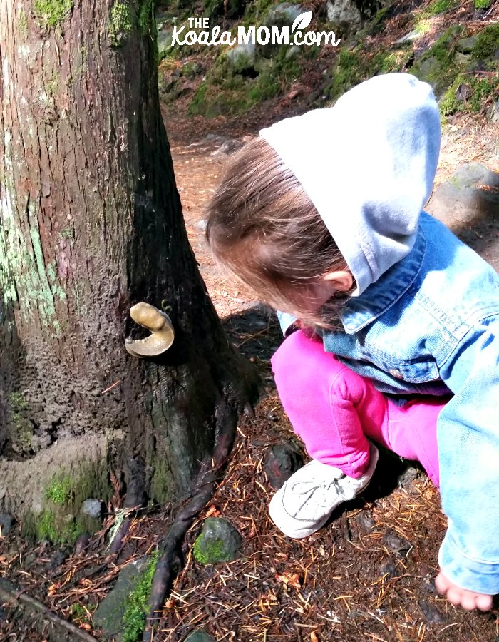 Girl checking out a banana slug on a cedar tree.