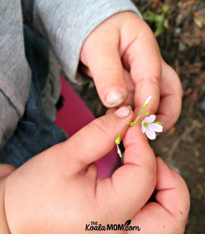 Toddler holding a tiny pink flower.