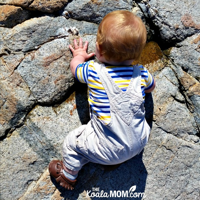Baby crawling over the rocks at Lighthouse Park.