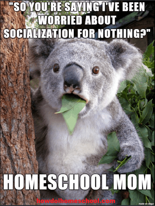 "Surprised koala: ""So you're saying I've been worried about socialization for nothing?"""