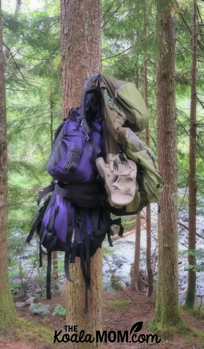 Empty packs hanging in a tree during an overnight backpacking trip in BC.