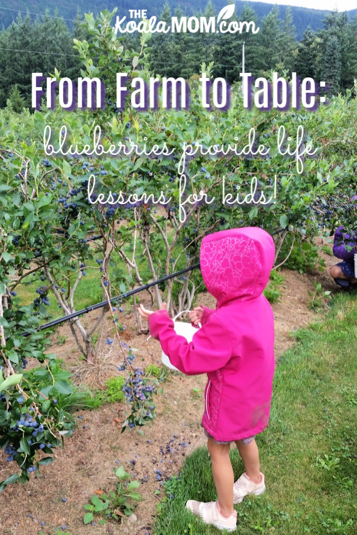 From Farm to Table: blueberries provide life lessons for kids!
