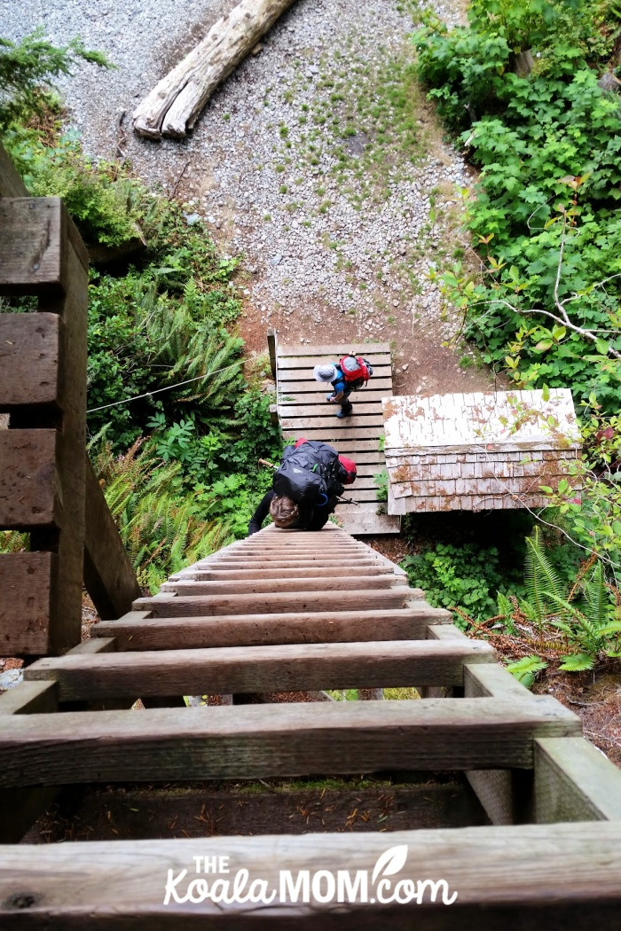 First ladder on the West Coast Trail