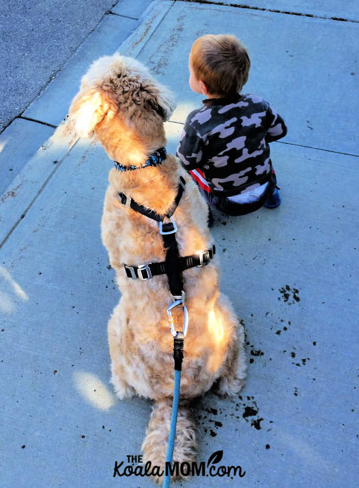 Toddler sitting with a dog.