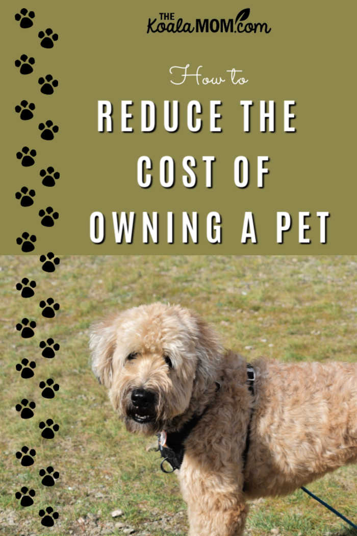How to reduce the cost of owning a pet.