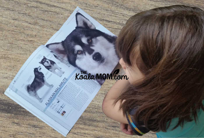Girl reading about an Alaskan Malamute in The Complete Dog Breed Book.