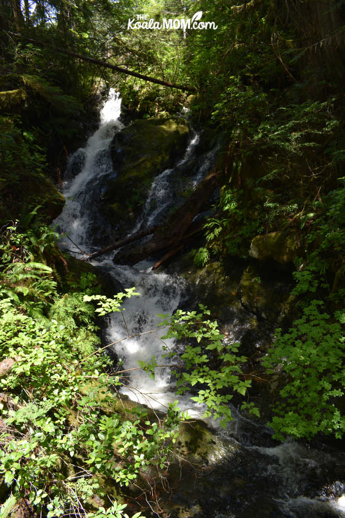 Waterfall on the Juan de Fuca Trail.