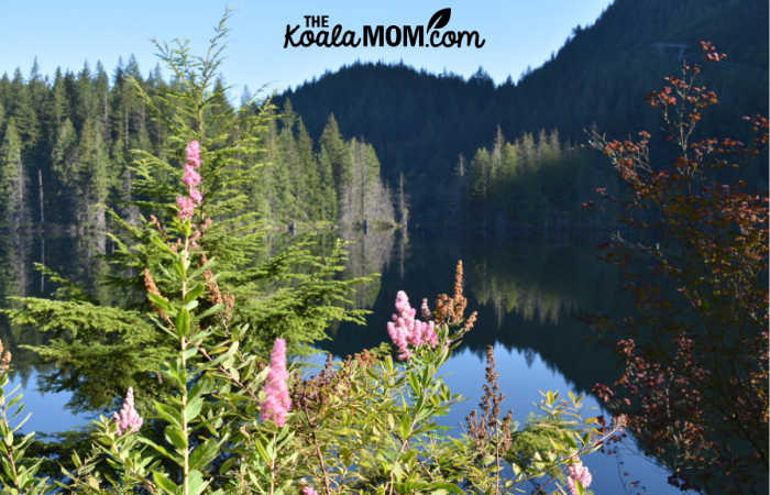 Pink flowers and mountains and still waters in Belcarra Regional Park.
