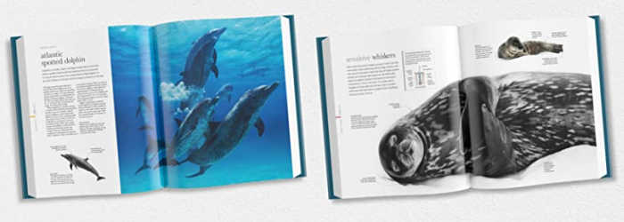 Sample pages from inside Oceanology: The Secrets of the Seas Revealed (DK Books / Smithsonian)