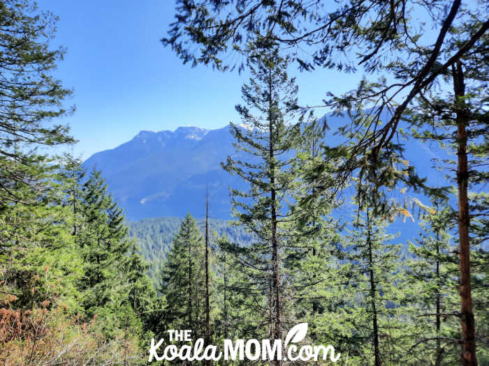 Our viewpoint of Alouette Lake from the trail.