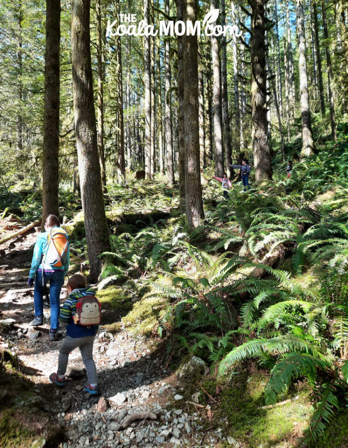 Kids hiking the Viewpoint Trail in Golden Ears Provincial Park.