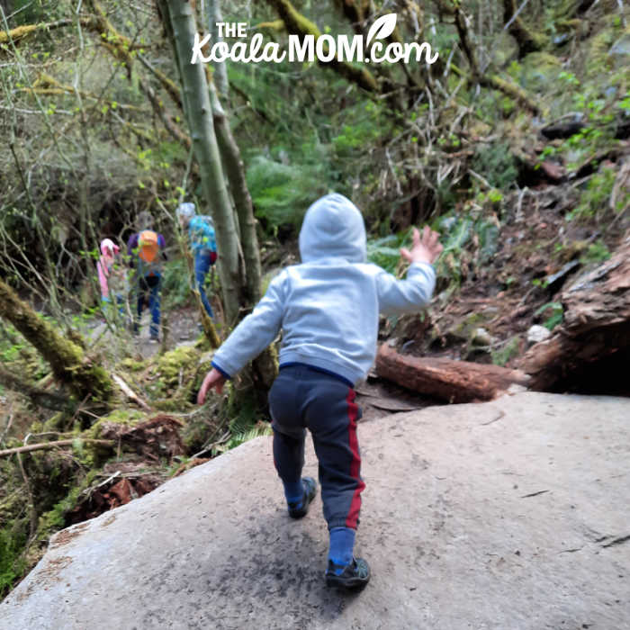 3-year-old hikes over a large flat rock on the trail.