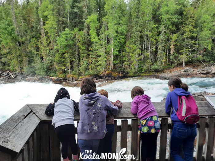 Five children viewing Bailey's Chute in Wells Gray Provincial Park.