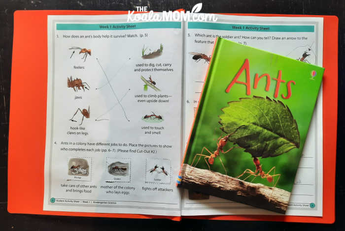 A sample of the BookShark Science Level A activity pages for the Ants book.
