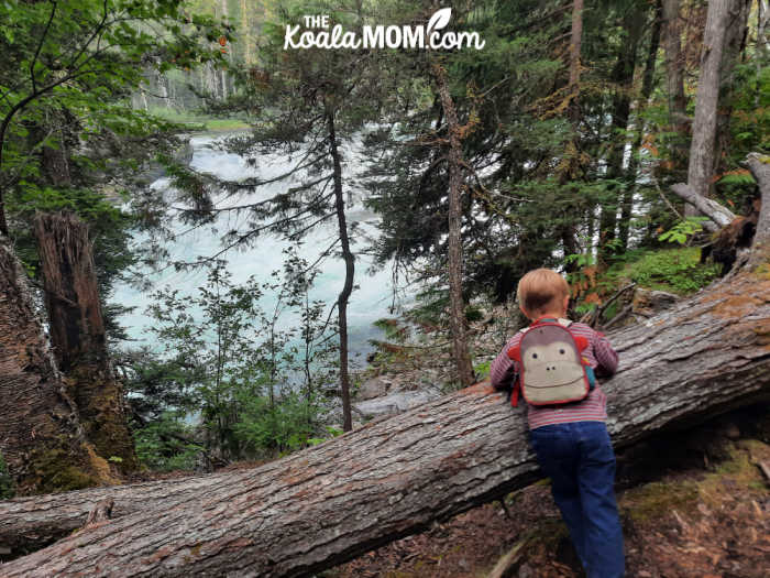 Three-year-old stopping to view a fallen log on the West Lake Loop.